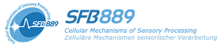 SFB889 Cellular Mechanisms of Sensory Processing